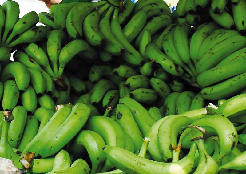 Banana's are at the heart of the economy of Santa Marta.