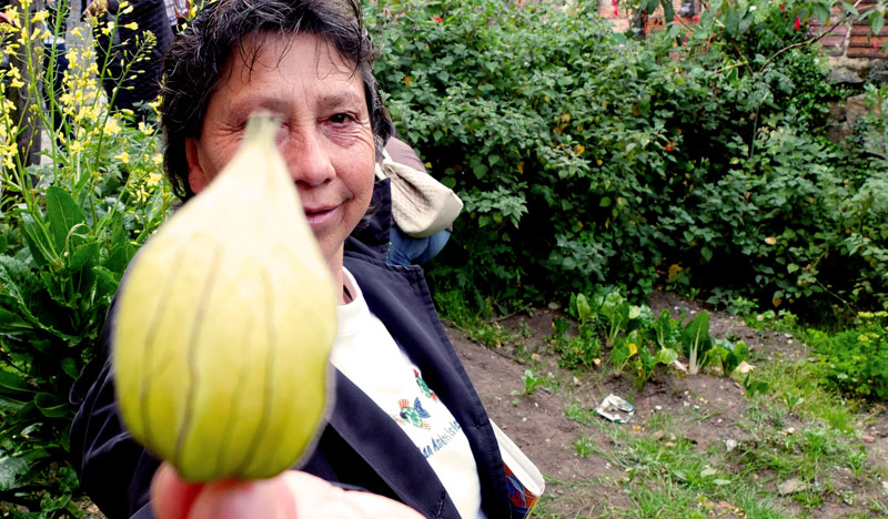 Urban gardens as part of a non-profit program in southern Bogotá.