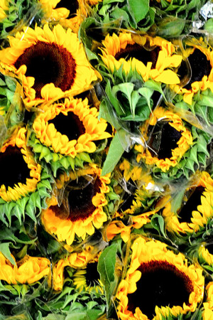 Colombia is one of the world's largest flower producers, and Paloquemao offers a truly impressive variety of blooms.