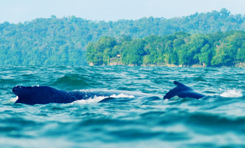 With the approaching whale watching season, one local NGO sets an example with its sustainable and community-led tourism.