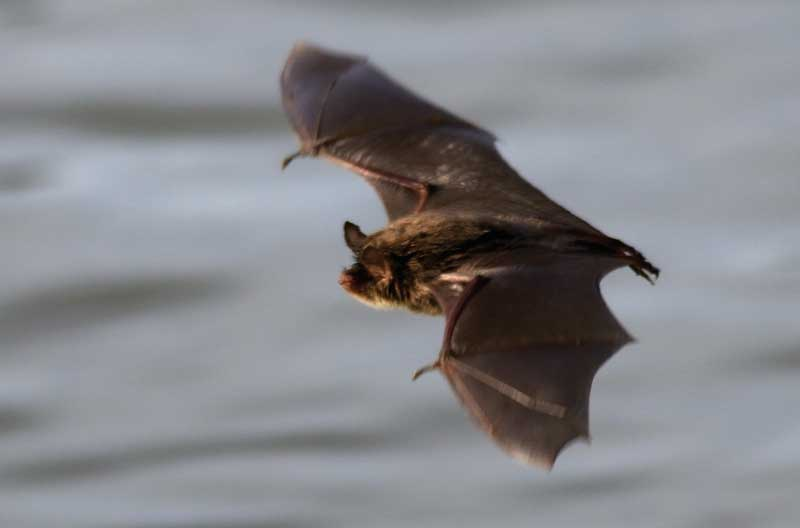Beware of bat bites in the Colombian Pacific.