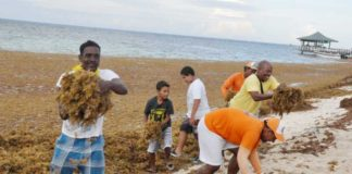 Islanders from San Andres remove kilometers of seaweed which washed ashore September.
