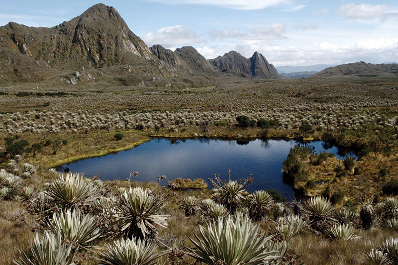 High altitude wetland in Colombia.