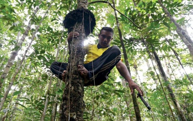 Measuring carbon in Colombia's forests
