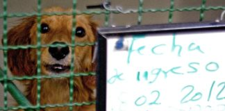 Animal shelter in Bogotá