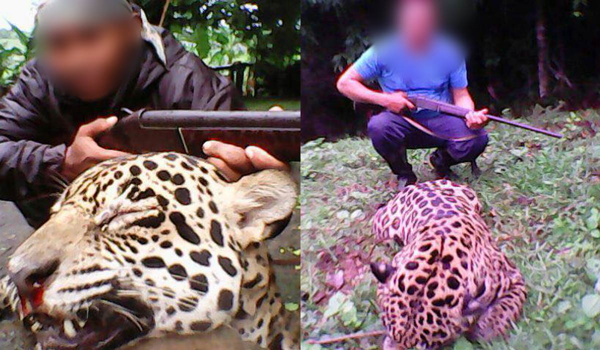 Images circulating on social media appear to depict two men posing with a dead jaguar.