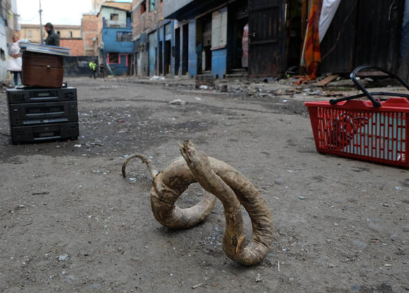 Streets of horror: A dried snake used for Satanic rituals.
