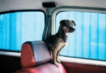 A curious passenger gets ready for a ride. (Photo by Alejandra Parra)