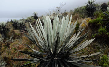 sumapaz national park colombia