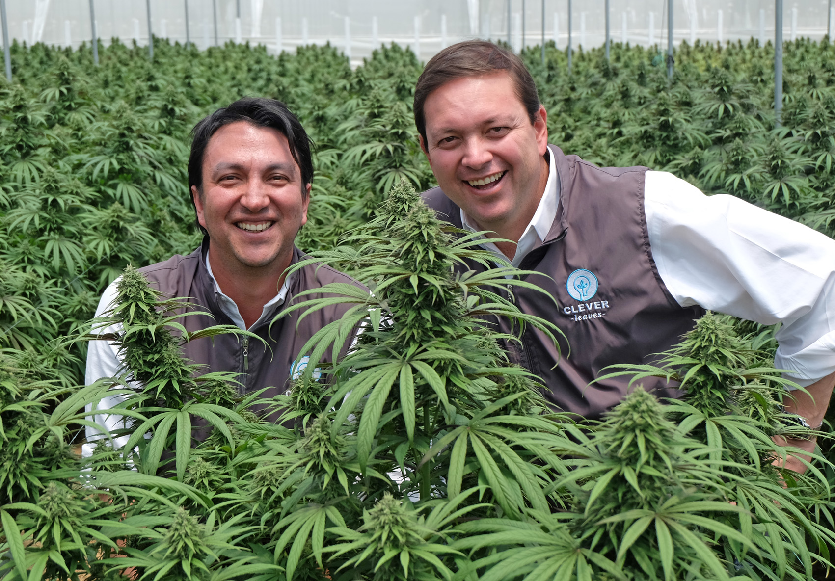 Clever Leaves and the intelligent business of medicinal cannabis from  Colombia   The City Paper Bogotá