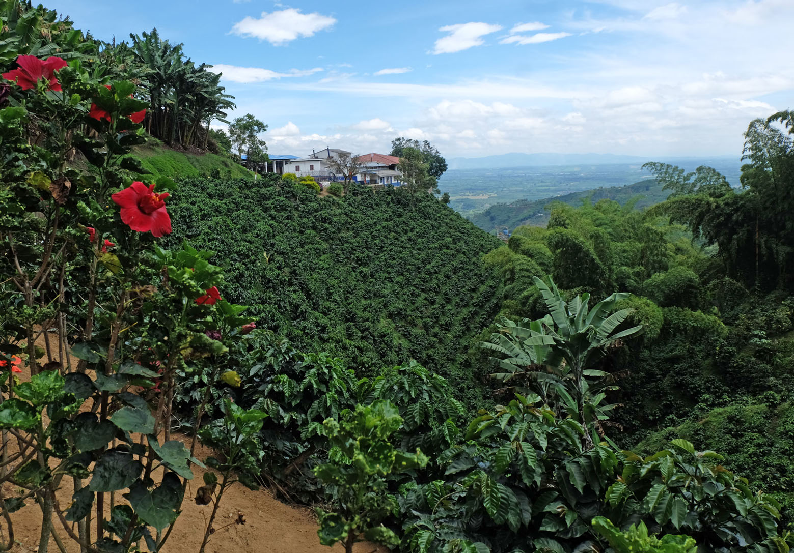 Café San Alberto: A taste of luxury harvested at the heart of Quindío | The City Paper Bogotá